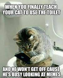 Funny Memes Cats - funny cat memes imgflip