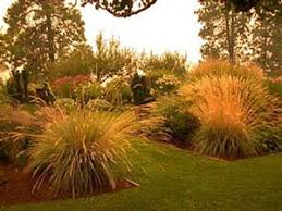 ornamental grasses in masses