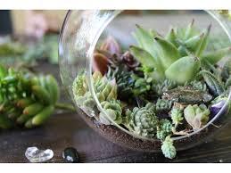 build your own succulent terrarium at whole foods arlington ma