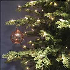 stein u0027s garden u0026 home neuman tree jamestown fir 7 ft w clear