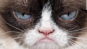Grumpy Cat Has Died Youtube - meet grumpy dog and the puppy who looks like a bear cnn