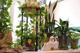arranging indoor plants little paths so startled