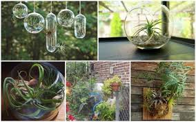 how to create an air plant terrarium how to instructions