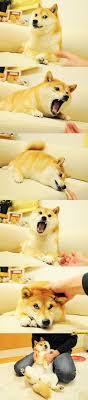 Doge Meme Original - doge meme original photos starecat com