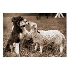 australian shepherd e cavalli 61 best the border collies images on pinterest animals collie