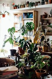 1591 best houseplants images on pinterest plants houseplants