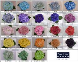 hydrangeas flowers tinted fresh wedding hydrangea by five hydrangea