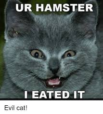 Evil Cat Meme - ur hamster i eated it evil cat hamster meme on me me