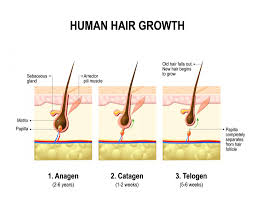 Antidepressants And Hair Loss How Fast Does Hair Grow A Complete Answer For Your Hair