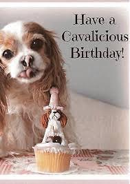 cavalier king charles spaniel birthday cards 2 50 picclick uk
