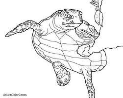 sea turtle coloring page help hawksbills