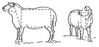 how to draw sheep with linda birch