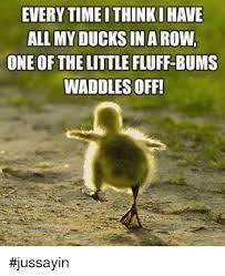 Funny Duck Meme - 25 best memes about ducks in a row ducks in a row memes