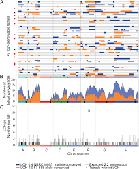 variation of the meiotic recombination landscape and properties