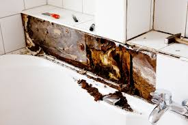 5 reasons you may have mold in your bathroom call us today