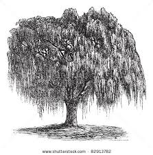 willow tree silhouette clipart 1995206