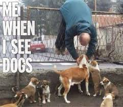 Crazy Dog Lady Meme - i m a dog lover i wanna hug them when i see them funny meme
