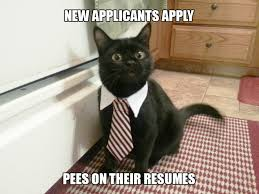 Cats Resume If You Had A Cat Boss U2026