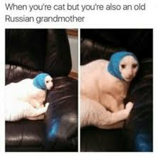 Meme Grandmother - when you re cat but you re also an old russian grandmother meme