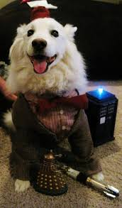 the most popular dog costumes popsugar pets now there u0027s a doctor i u0027d kiss pets pinterest dr who