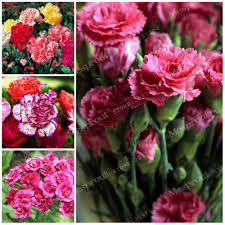 compare prices on garden flowers seeds online shopping buy low