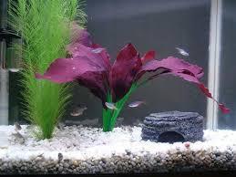 fish tank maintenance and cleaning ratemyfishtank