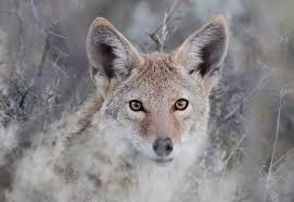 Michigan wild animals images List of michigan wild animals michigan city wildlife removal jpg