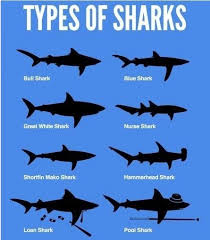 25 pictures sharks ideas funny sharks