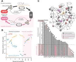 Home Evolutionary Healthcare Reverse Evolution Leads To Genotypic Incompatibility Despite