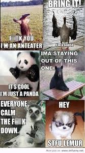 Funniest Animal Memes - funny animals talking meme