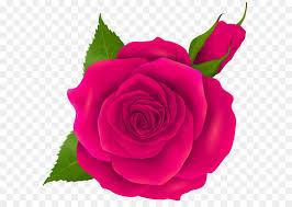 pink rose and bud transparent png clip art free transparent