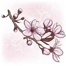 flower design pictures cherry blossoms cherries and
