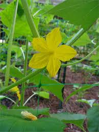 wholesale plant protection netting trellis plant support net buy