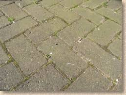 How To Remove Lichen From Patio Pavingexpert Paving Maintenance And Cleaning