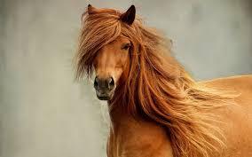 41 horses wallpapers free desktop backgrounds horses nm cp