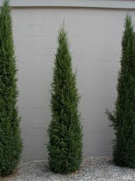 Bushes For Landscaping Scintillating Bushes For Landscaping Photos Best Ideas