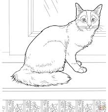 trend cat coloring pages 94 about remodel coloring for kids with