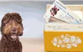 french bulldog birthday cards sloppy kiss cards