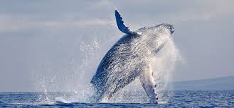 cape cod whale watching package surfside hotel u0026 suites