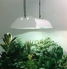 growing plants indoors with artificial light tips for growing plants with artificial grow lights