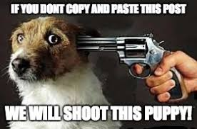 Meme Copy And Paste - shoot this puppy imgflip