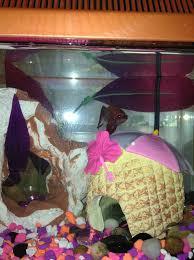 Betta Fish Decorations 33 Best My Betta Fish
