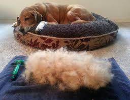 Do All Short Haired Dogs Shed by Amazon Com K9konnection Dog Or Cat Deshedding Brush U0026 Undercoat