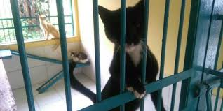 hukum memandulkan kucing ingin sterilisasi kucing gratis begini caranya kompas com