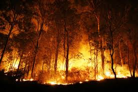 forest fires contributed to record global tree cover loss