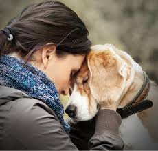 what are the benefits of in home euthanasia for dogs