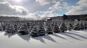 real christmas tree so where can you buy a real christmas tree christmas 2017