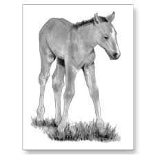 13 best pencil drawings of horses images on pinterest pencil