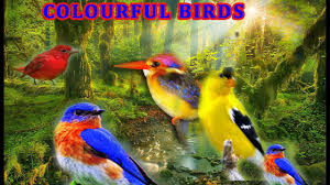 colourful birds for kids youtube