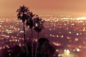 city lights los angeles palm trees twinkling lights lfand101